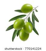 Vertical Green Olive Branch...