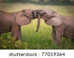 Elephants In Love Masai Mara...