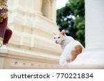thai cat in the temple. | Shutterstock . vector #770221834