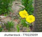 beautiful of yellow flowers... | Shutterstock . vector #770225059