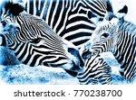 zebra mother and calf... | Shutterstock . vector #770238700