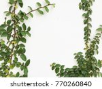 green creeper plant on a white... | Shutterstock . vector #770260840