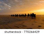 camels walking at sunset along...   Shutterstock . vector #770266429