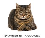 Mixed Breed Cat Crossed Legs...