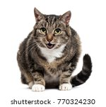 mixed breed cat with open mouth ... | Shutterstock . vector #770324230