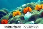 coral reef. anemone fish.... | Shutterstock . vector #770324914