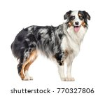side view of a panting... | Shutterstock . vector #770327806