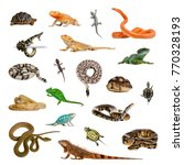 Large Collection Reptile Pet Exotic - Fine Art prints