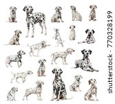 large collection of dalmatian ... | Shutterstock . vector #770328199