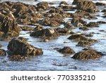 Seaweed Covered Rocks Visible...