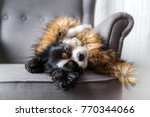 Stock photo cute dog relaxing under furry warm cover 770344066