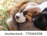 Stock photo closeup of puppies sleeping on the grass 770360338