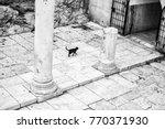 Black Cat And Cardo Maximus...