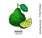 bergamot vector drawing.... | Shutterstock .eps vector #770375464
