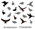 duck silhouettes isolated on... | Shutterstock . vector #770430490