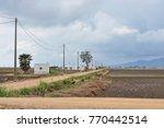 paddy rice fields landscape...   Shutterstock . vector #770442514