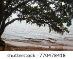 goose creek state park | Shutterstock . vector #770478418