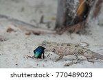 lizard by eating | Shutterstock . vector #770489023