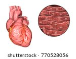 human heart and close up view...   Shutterstock . vector #770528056