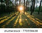 Sun Shining Through Forest...