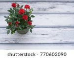 Stock photo red rose in pot 770602090