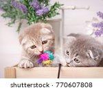 portrait of two scottish...   Shutterstock . vector #770607808
