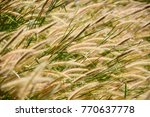 Brown Grass Flowers In The ...