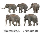 big set   wild elephant... | Shutterstock . vector #770650618