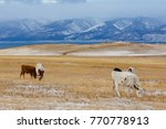 cows graze on a yellow pasture... | Shutterstock . vector #770778913