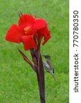 A Small Bird Sitting On A Flower