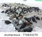 A Flock Of Pigeons In The City...
