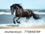 Stock photo black friesian horse runs gallop on the water on the coast 770848789