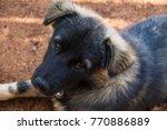 dog relaxing on ground. | Shutterstock . vector #770886889