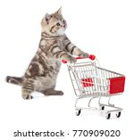 funny cat standing with... | Shutterstock . vector #770909020