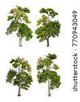 collection pf old tree isolated ... | Shutterstock . vector #770943049