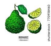 bergamot vector drawing.... | Shutterstock .eps vector #770958460
