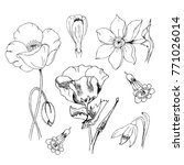 flowers in black ink. poppy... | Shutterstock . vector #771026014