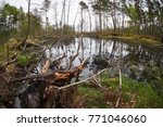 landscape with trees gnawed by...   Shutterstock . vector #771046060