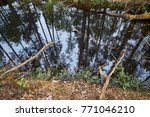 landscape with trees gnawed by...   Shutterstock . vector #771046210