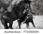 two draft horses fighting.... | Shutterstock . vector #771050554