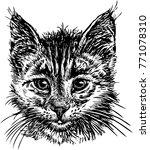 portrait of a house kitten | Shutterstock .eps vector #771078310