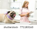 Stock photo happy pug lying on examination table at the vet clinic female veterinarian making notes on the 771183163
