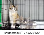 two kittens in a cage in an... | Shutterstock . vector #771229420
