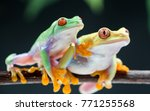 royalty high quality free stock ... | Shutterstock . vector #771255568