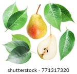 green pear leaves and pear... | Shutterstock . vector #771317320