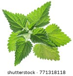 Nettle Or Urtica Leaves...