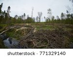 landscape with trees gnawed by...   Shutterstock . vector #771329140