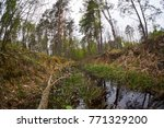 landscape with trees gnawed by...   Shutterstock . vector #771329200