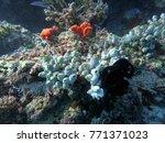 amazing coral when i freedive... | Shutterstock . vector #771371023