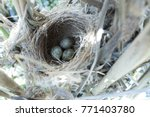 Small photo of Acrocephalus agricola. The nest of the Paddyfield Warbler in nature. Russia, the Ryazan region (Ryazanskaya oblast), the Pronsky District. Nowomitschurinsk.